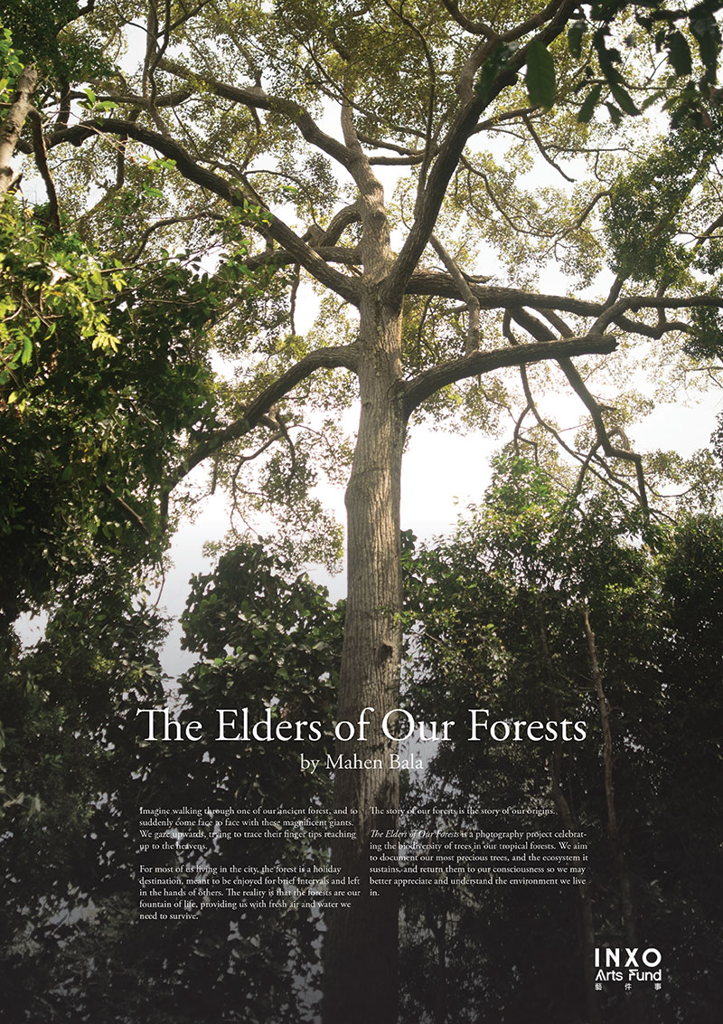 Elders of Our Forests